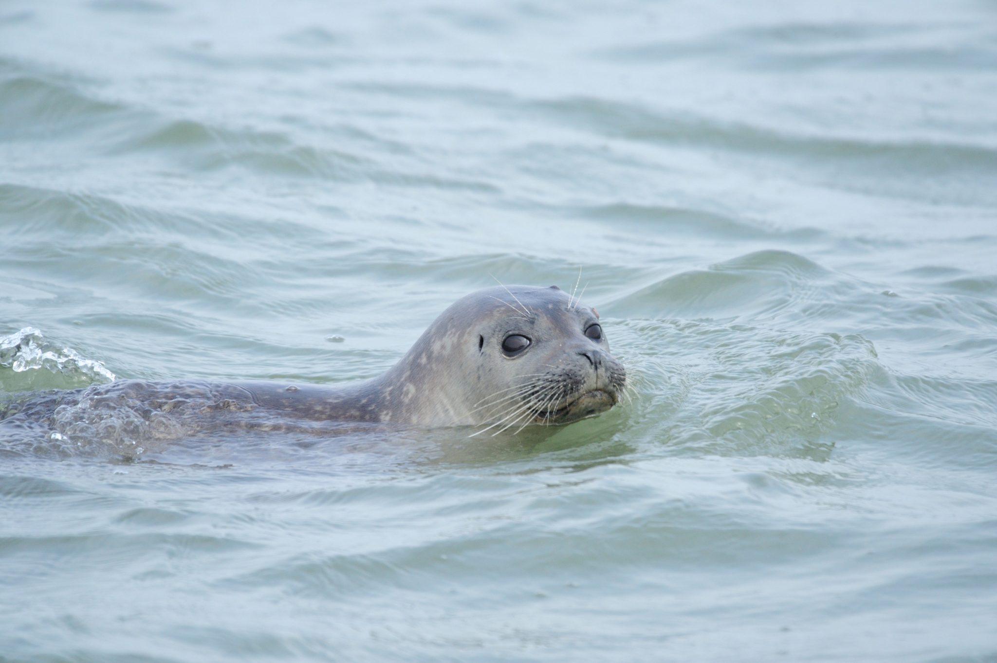 Visiter les phoques